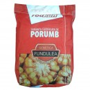 Semințe Porumb Olt